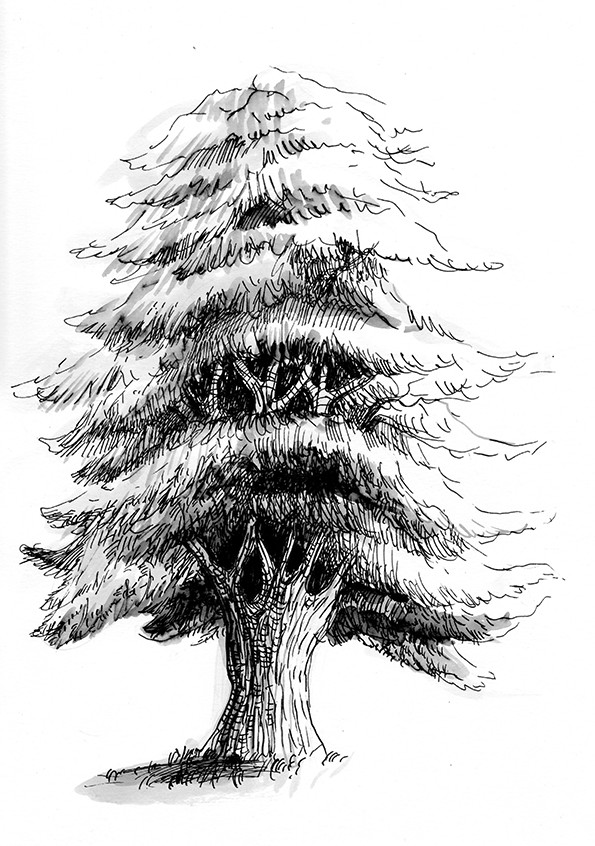 Cedre Tree