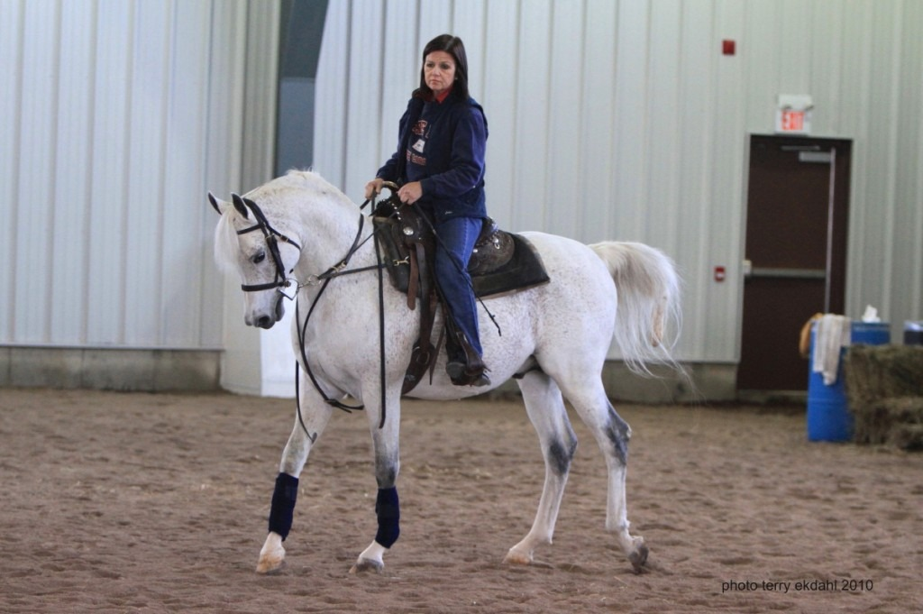 Home A H A E C Arabian Horse Shows And Events Eastern Canada