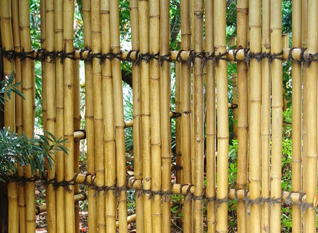 Lessons in Bamboo