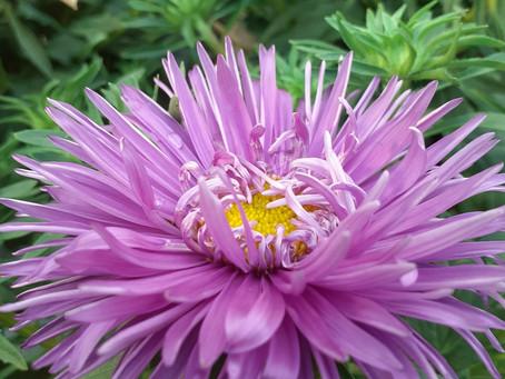 Kasvata itse kukkien taimet kukkapenkkiin!