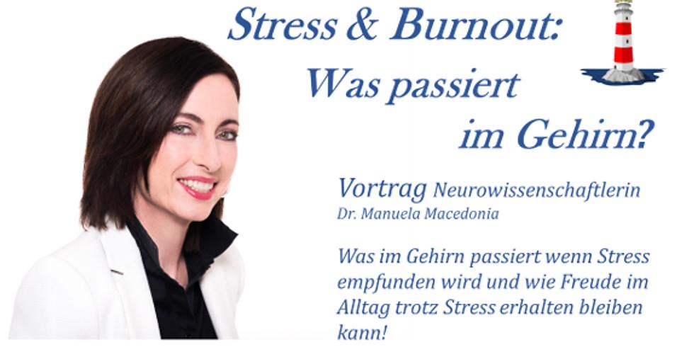 Stress & Burnout: Was passiert im Gehirn?