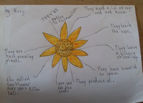 Tuesday 23.6.20 Team 1 Home Learning