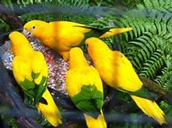 parque das aves Piriquito