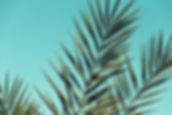 Canva - Green Leaves_edited.jpg