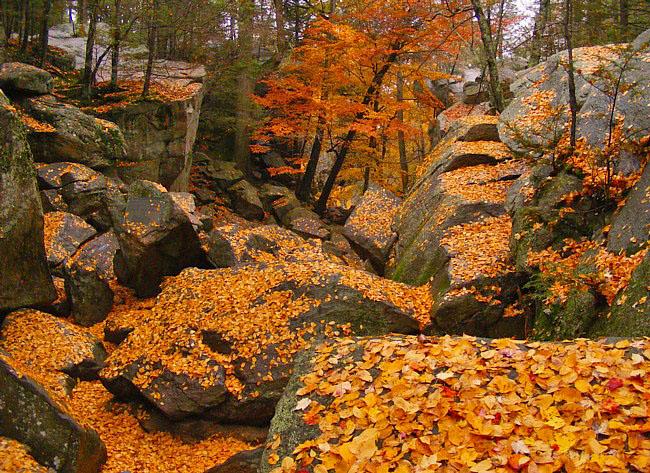 Fall Foliage at Purgatory Chasm