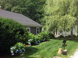 Summer Hydrangeas at the Cottage