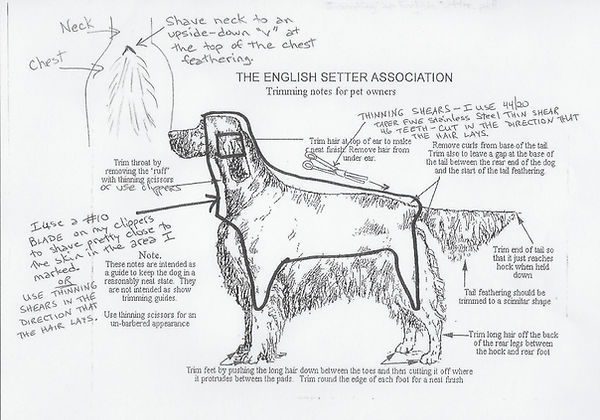 Grooming Your English Setter.jpg