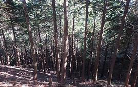 整備前森林.png