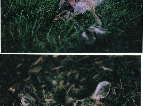 Miranda Sensorex II 35 mm