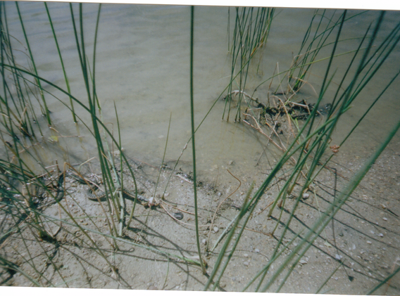 Disposable 35 mm Snake eating/ carrying a dead frog