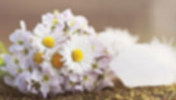 wildflowers-2218479_960_720.jpg