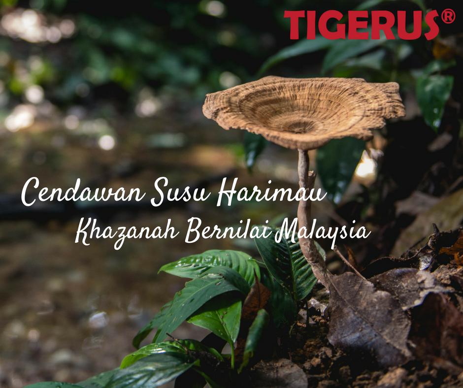 Legend of Tiger Milk Mushroom