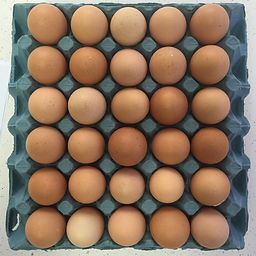Bubba-Eggs.jpg