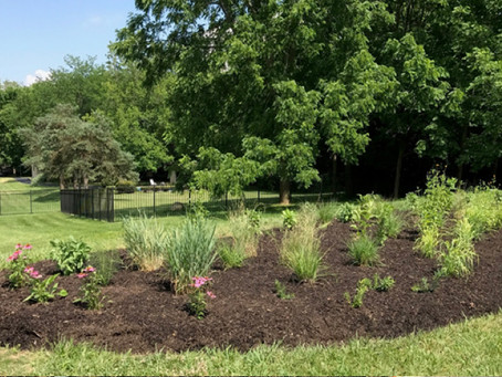 Ohio Legislature Declares April as Native Plant Month