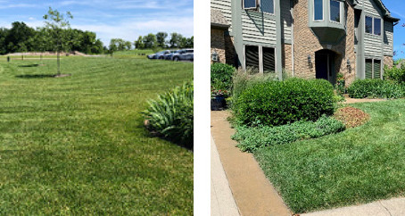 What Makes a Lawn Green?