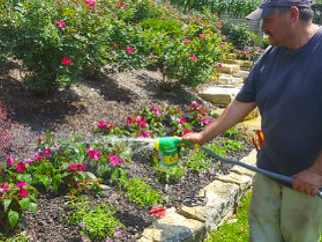 Keep Fertilizing throughout Summer