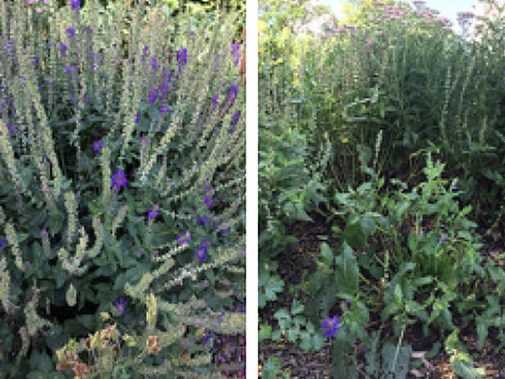 Thin Your Plants with Proper Summer Pruning