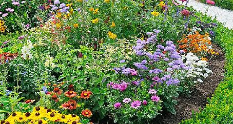 Planning a Summer Perennial Garden