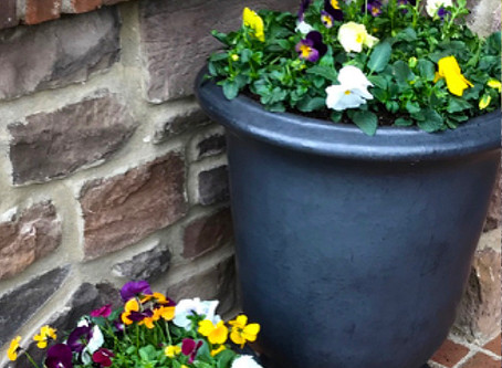 Spring Planting & Summer Annuals