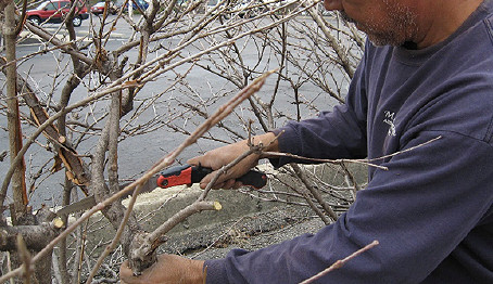 Why Do We Prune by Hand?