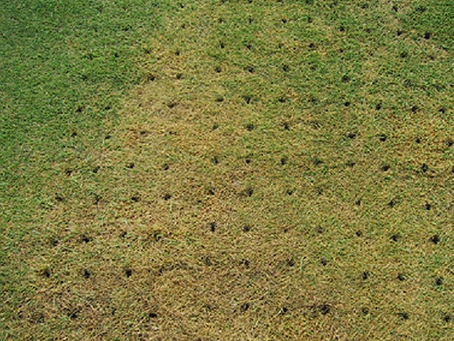 Should I Be Aerating My Lawn?
