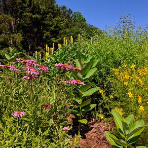 Pollinator-Friendly Plants