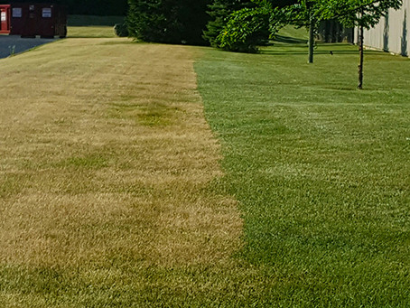 Can Your Lawn Handle the Peak of Summer Heat?