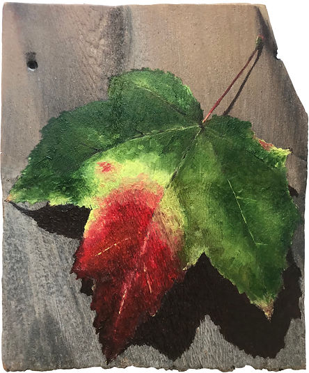 Green to Red Leaf Study