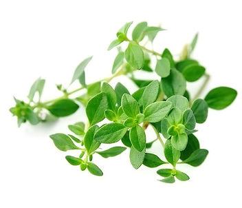 thyme fresh herb.jpg