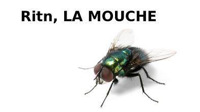 Ritn, LA MOUCHE.png