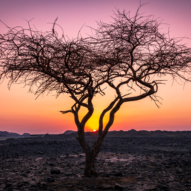 Tree at sunset Buraq Dam.jpg