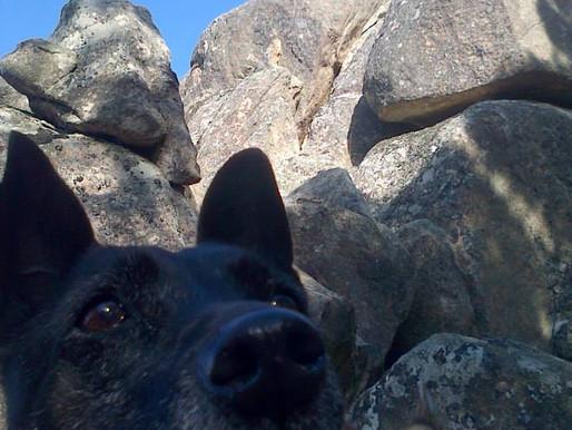 The Senior Dogs' Saga Holiday by Auriel Roe