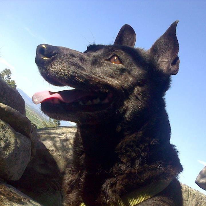 www.dogberrybooks.com