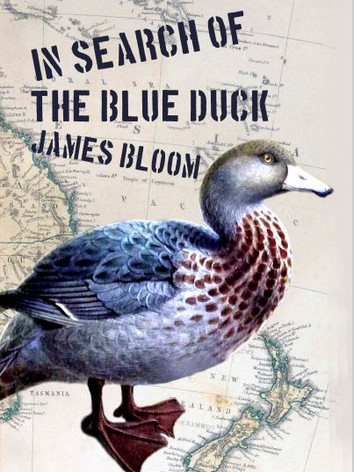 In Search of the Blue Duck