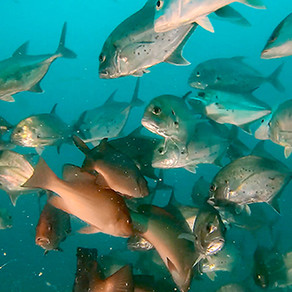 NT GOV FISHERIES: HOW TO BE A REEF GUARDIAN