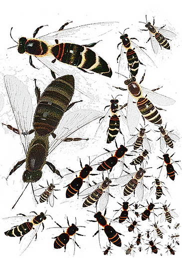 Copy of bee colony8.png