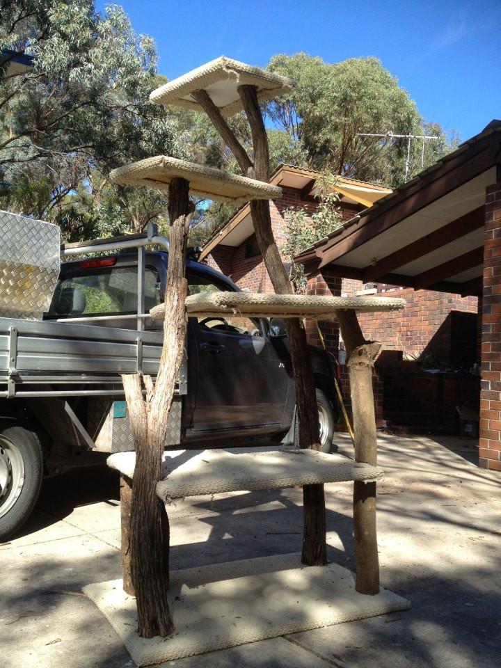 Outdoor Scratching Posts Adelaide