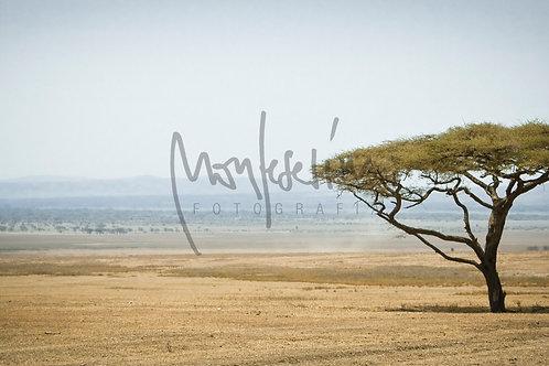 Ngorongoro,Tanzania