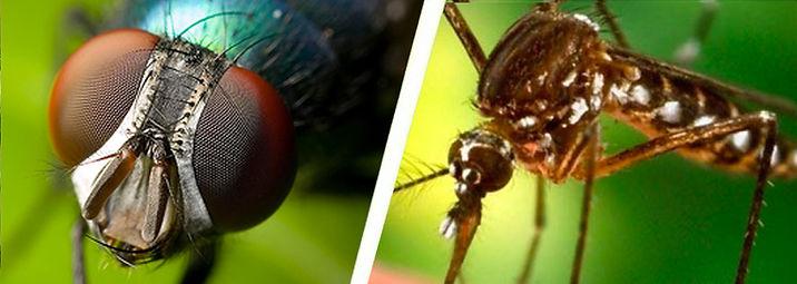 moscas-y-mosquitos 2.jpg