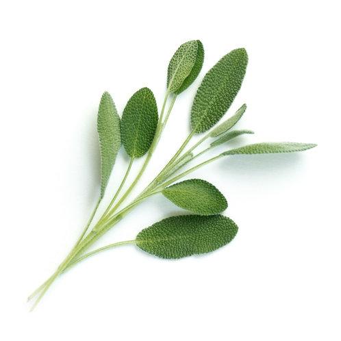 Lingots® Organic Sage - Hierbas Aromáticas