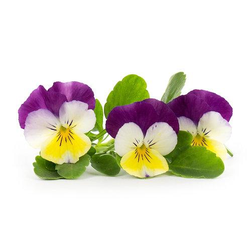 Pensamientos orgánicos Lingots® - Flores comestibles