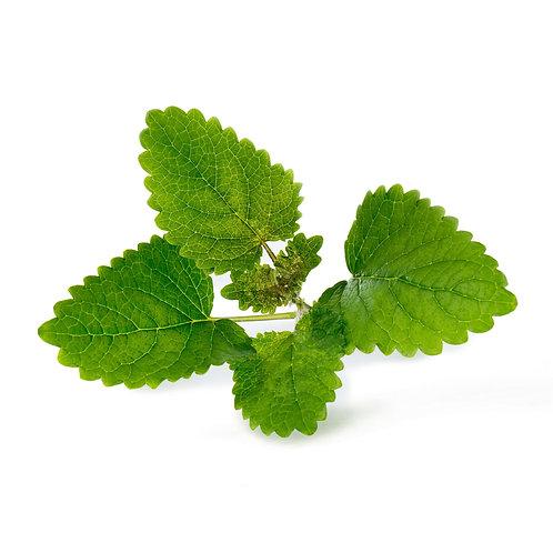 Lingots® Organic Lemongrass - Hierbas aromáticas