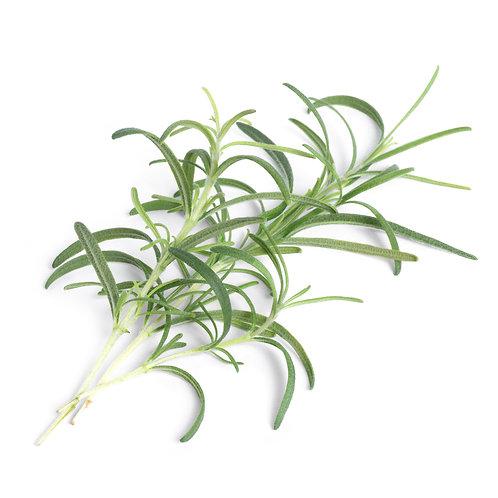 Alecrim Lingots® - Ervas Aromáticas