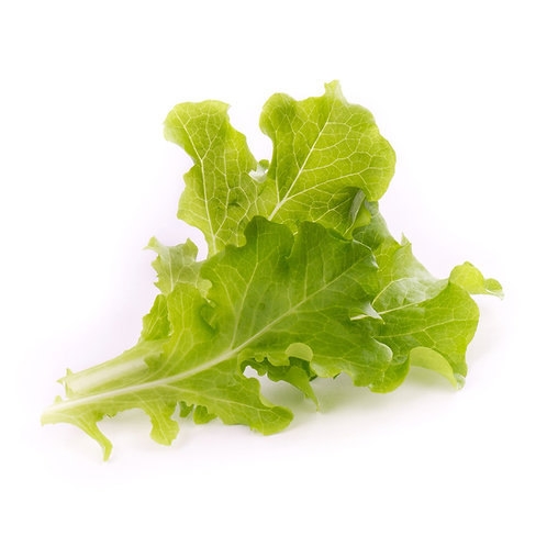 Lingotes® de lechuga con cuentas orgánicas - Verduras