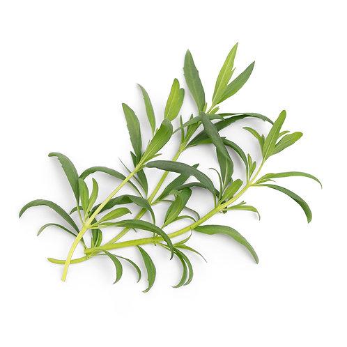 Lingots® Hisopo Orgánico - Hierbas Aromáticas