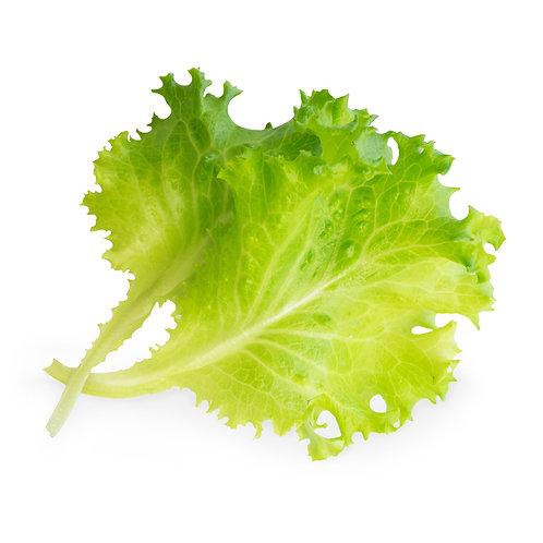 Alface Orgânica Lingots® - Vegetais