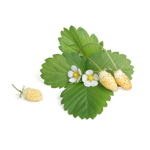 Morangos Brancos Lingots® - Frutas