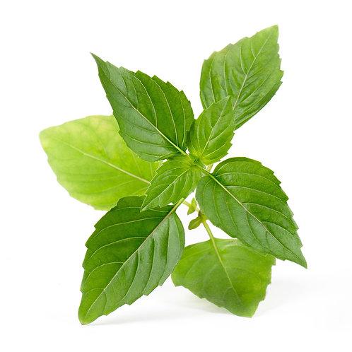 Manjericão Tailandês Orgânico Lingots® - Ervas Aromáticas