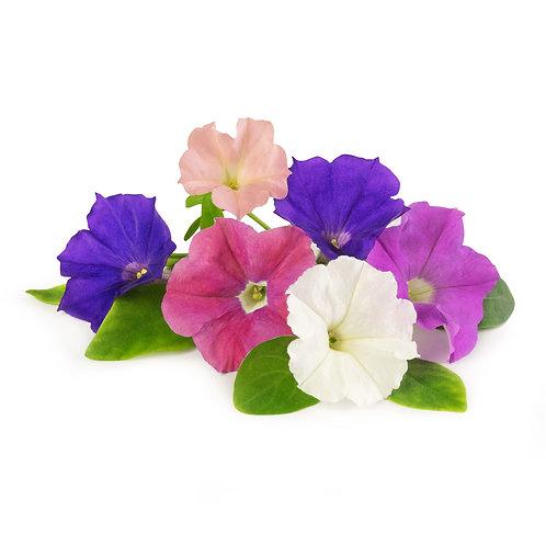 Lingots® Petunia - Flores comestibles