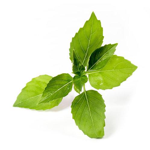 Manjericão Limão Orgânico Lingots® - Ervas Aromáticas
